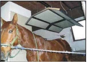 Tierplatten Pferdesolarium